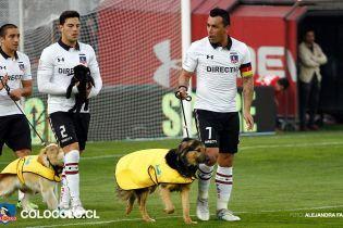 Видео, которое вас умилит. В Чили футболисты вышли на поле в сопровождении бездомных собачек