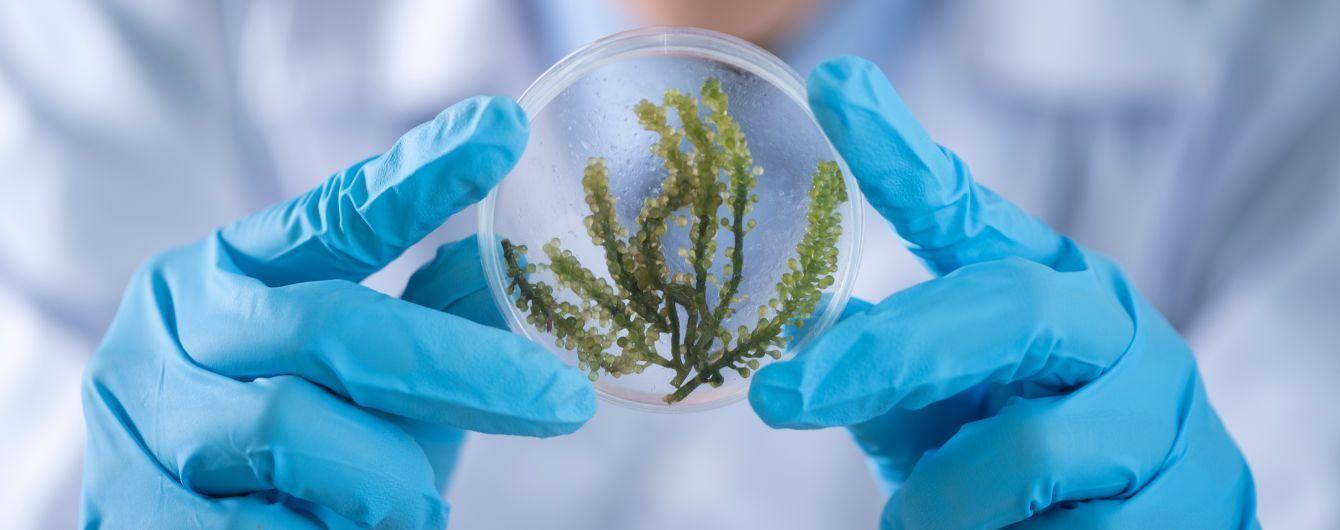 Наука не стоїть на місці: 10 гарних новин, які відволічуть від коронавірусу