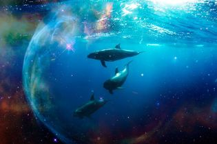 Дні дельфіна 2020 року — дуже несприятливий період