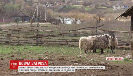 Жителей двух сел в Кировоградской области терроризируют волки