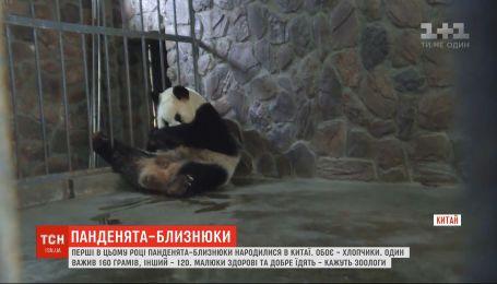 Первые в этом году - в Китае родились пандочки-близнецы