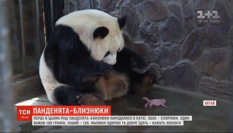 Пандочки-близнецы родились в провинции Сычуань