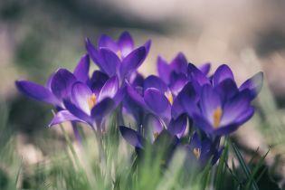 26 березня 2020 року: яке сьогодні свято, прикмети та День ангела