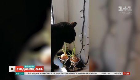 """Веселые видео с домашними любимцами зрителей """"Сніданку з 1+1"""""""