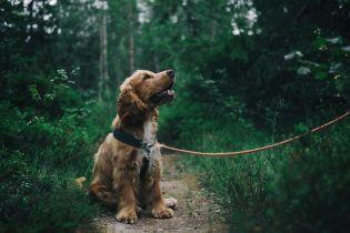 """Собаки стали """"перепустками"""" на вулицю, але волонтери закликають не брати псів до себе лише через це"""