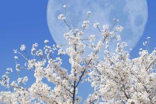 Время борьбы, перемен и флирта: лунный календарь на апрель-2020