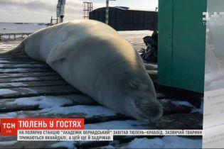 """На полярную станцию """"Академик Вернадский"""" пожаловал тюлень-крабоед"""
