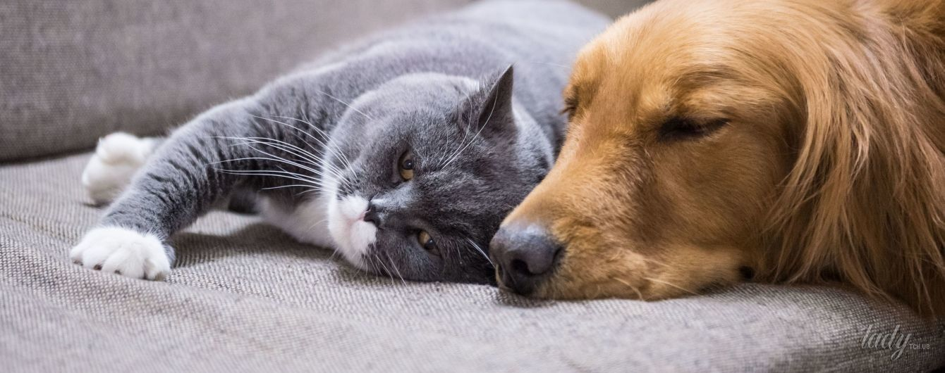 5 порід собак, які найкраще ладнають із дітьми