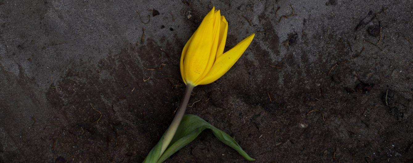 Катастрофа для Нідерландів: через коронавірус фермери знищують тисячі квітів