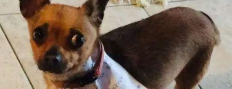 Мексиканець на карантині змусив пса сходити по чипси до магазину