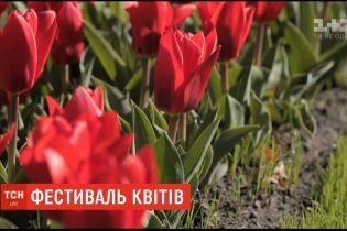 Фестиваль квітів у Нідерландах не cкасовується - його проведуть через відеозв'язок
