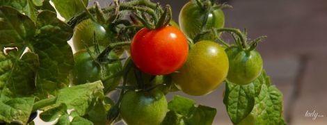 5 салатов с помидорами, которые вы еще не пробовали