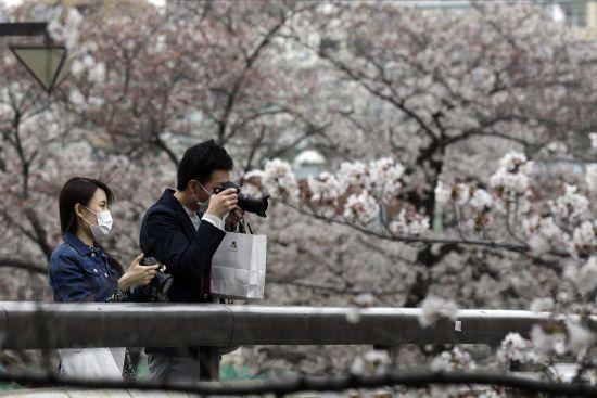 У Японії зацвіла сакура: влада Токіо закрила парки через коронавірус