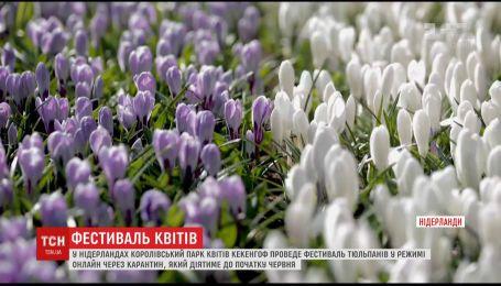 Королівський парк квітів у Нідерландах проведе фестиваль тюльпанів у незвичному режимі
