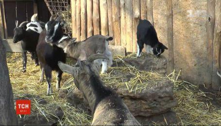 В Одеському зоопарку триває весняний бебі-бум