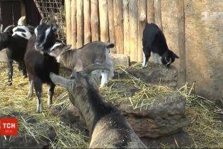 В Одесском зоопарке длится весенний беби-бум