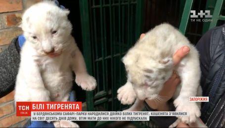 Двоє білих тигренят народилися в бердянському сафарі-парку