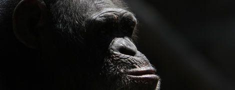 Старіння призводить до збільшення гормону стресу - цю рису люди могли успадкувати від інших приматів