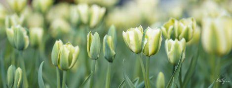 Гороскоп на 4 квітня для всіх знаків зодіаку: день підвищеної уразливості