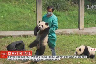 У Китаї сотні людей прийшли до зоопарку, аби подивитися на чотирьох маленьких панд