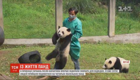 В Китае сотни людей пришли в зоопарк, чтобы посмотреть на четырех маленьких панд