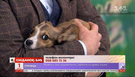 Собачка Абби с драматичной историей ищет заботливых хозяев