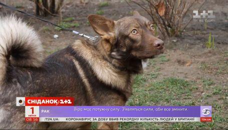 Как бездомный пес Малыш стал верным другом и спас жизнь своей хозяйке