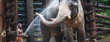 Из-за пандемии коронавируса тысячам слонов в Таиланде может грозить голодная смерть