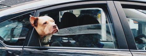 """На місці водія сидів пітбуль. У США поліцейські після погоні затримали чоловіка, який """"вчив собаку кермувати авто"""""""