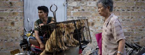 """""""Історичне рішення"""": у Китаї заборонили їсти домашніх тварин через пандемію коронавіруса"""