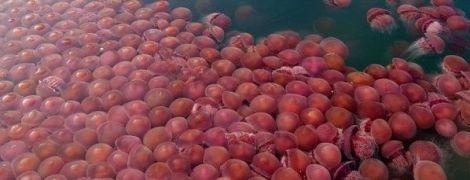 Поки туристи на карантині, прибережні води пляжів на Філіппінах заполонили томатні медузи
