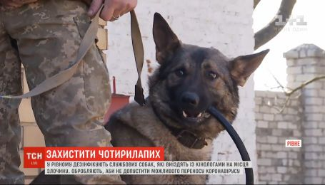 Як у Рівному убезпечують службових собак, щоб не переносили коронавірус