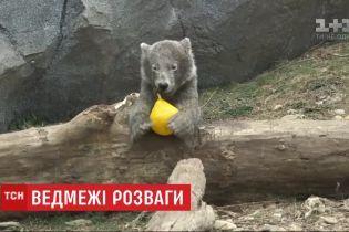 Игривая кроха: в венском зоопарке подрастает белый медвежонок Финья