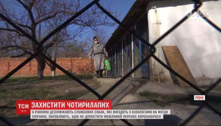 В Ровно дезинфицируют служебных собак, чтобы те не переносили коронавирус