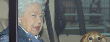 Разом навіть на карантині: як королева Єлизавета II та інші зірки проводять час зі своїми вихованцями
