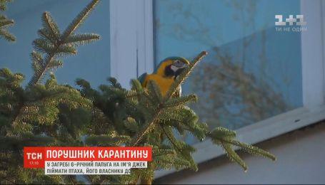 У Хорватії 6-річний папуга на ім'я Джек утік із дому під час карантину