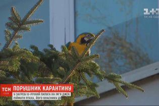 В Хорватии 6-летний попугай по имени Джек сбежал из дома во время карантина