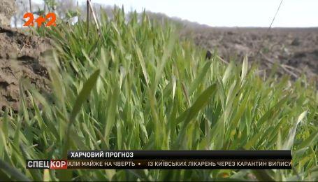 Коронавирус и посевной сезон: что будет с ценами на сельскохозяйственную продукцию