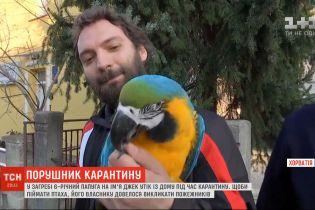 Порушник карантину: у Хорватії папуга втік з квартири і відмовився повертатись