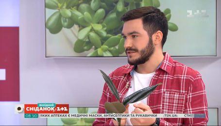 Натуральні добрива для рослин – поради садівника Павла Дем'янчука