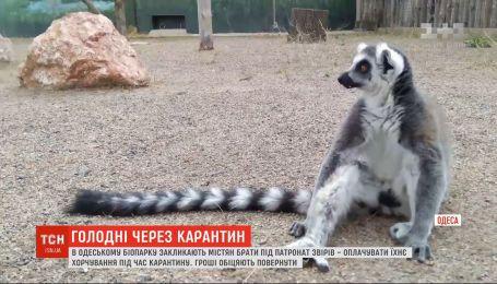 На грани выживания: из-за карантина Одесский биопарк не может прокормить животных