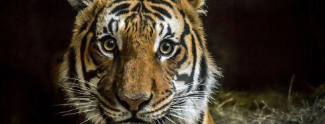 У ООН закликали заборонити торгівлю дикими тваринами для попередження майбутніх пандемій