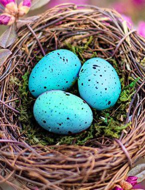 Що таке яйця робін і чому вони сині