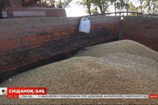 Троллейбусы на европейские деньги и увеличение экспорта пшеницы — Экономические новости