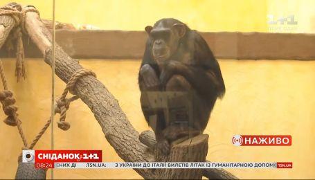 Как живет киевский зоопарк на карантине — прямое включение