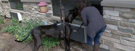 Пес-терапевт: в США собака общается с жителями дома престарелых через окно