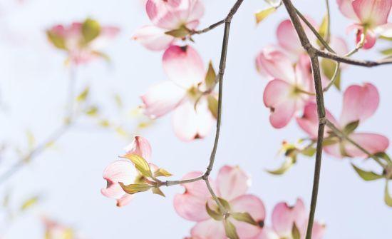 28 квітня 2020 року: день у календарі, прикмети та день ангела