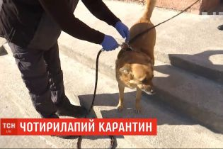 Залишатися на карантині: львівські комунальники вигулюють собак замість пенсіонерів