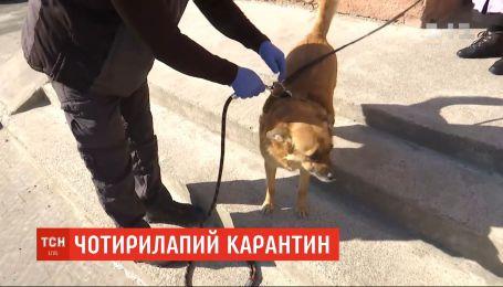 Оставаться на карантине: львовские коммунальщики выгуливают собак вместо пенсионеров