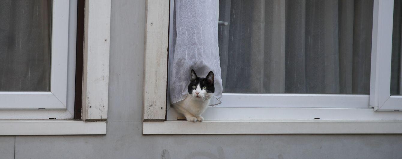 Исследования показали, что коты могут заразиться коронавирусом